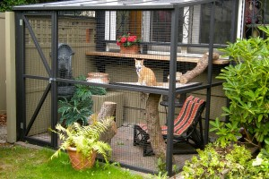 Serena in her backyard catio (photo courtesy of Catio Spaces)
