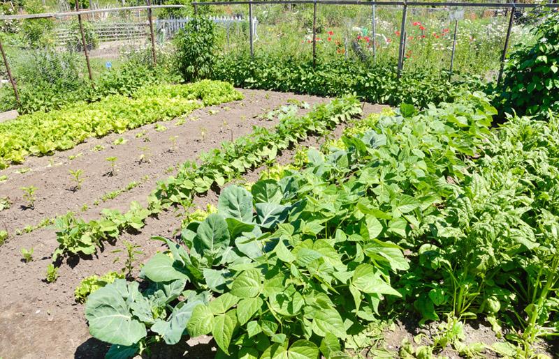 Dig Into Community Gardening @ Fairfax County | Prince William ...