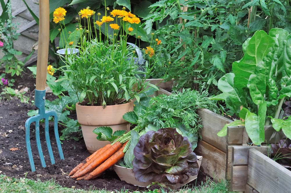 How To Prepare A Vegetable Garden Bed Zillow Porchlight