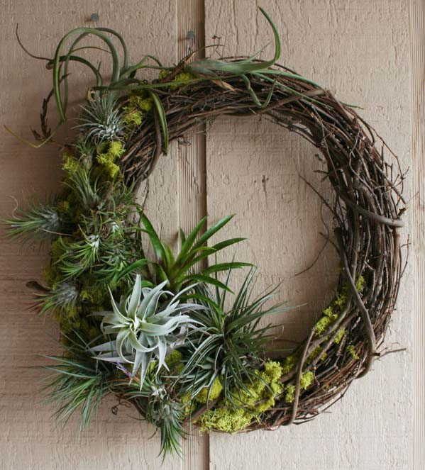 Tillandsia Wreath